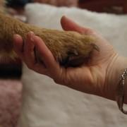 koirantassu ja diabeetikko