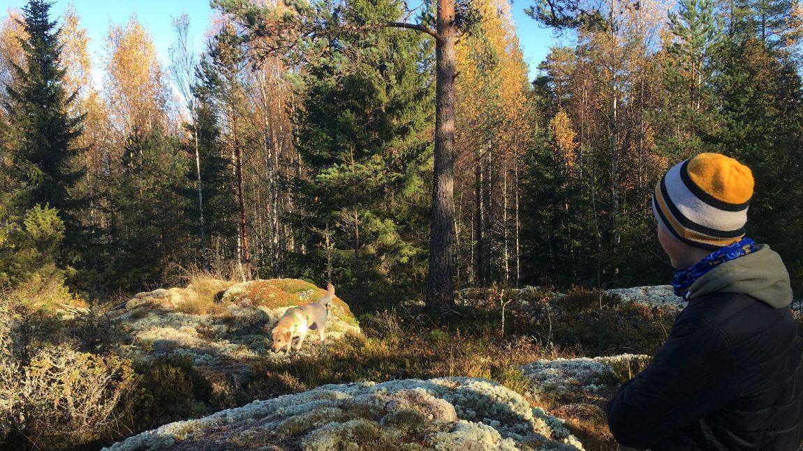 Metsässä2